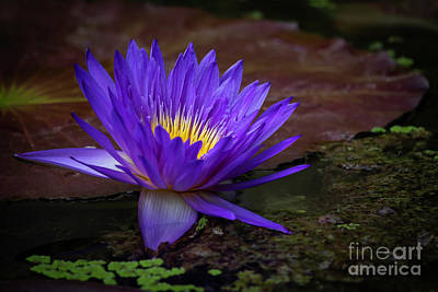 Photograph - Powerful Purple In The Pond by Sabrina L Ryan