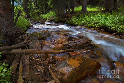 Photograph - Powerful Spring Runoff by Barbara Schultheis