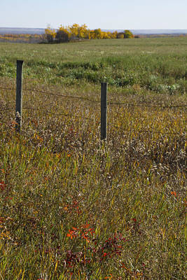 Photograph - Prairie Autumn by Ellery Russell