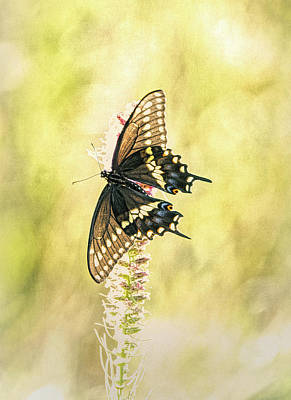 Photograph - Prairie Butterfly 2 by Patricia Cale