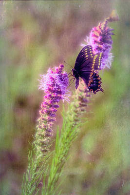 Photograph - Prairie Butterfly by Patricia Cale