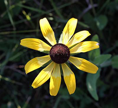 Photograph - Prairie Cone Flower by Les Weber