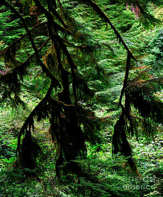 Photograph - Prairie Creek Redwoods State Park 12 by Terry Elniski