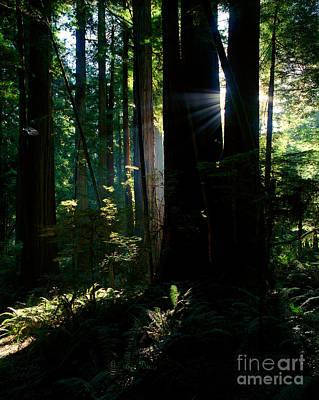 Photograph - Prairie Creek Redwoods State Park 6 by Terry Elniski