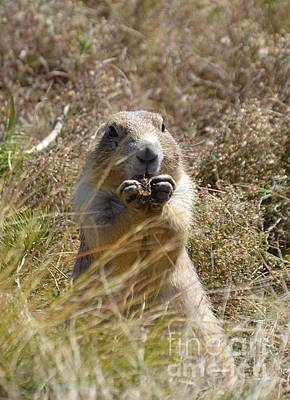 Photograph - Prairie Dog by Chalet Roome-Rigdon