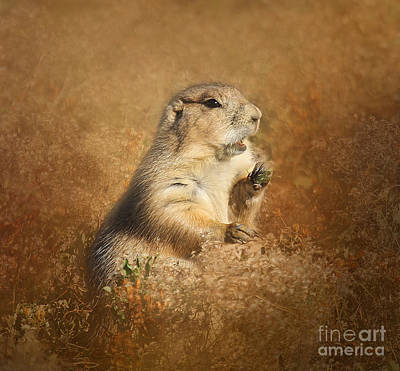 Photograph - Prairie Dog Conversation by Clare VanderVeen