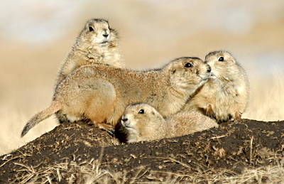 Photograph - Prairie Dog Family Portrait by Larry Ricker