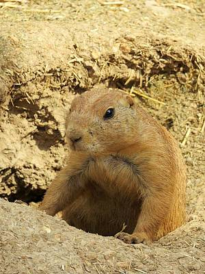 Photograph - Prairie Dog Peek by Robin Regan