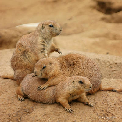 Photograph - Prairie Dog Pile by Deana Glenz