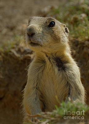 Photograph - Prairie Dog-signed-#8394 by J L Woody Wooden