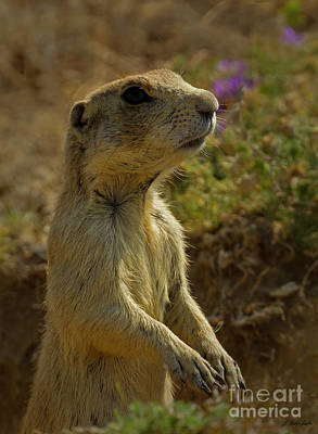 Photograph - Prairie Dog-signed-#8414 by J L Woody Wooden