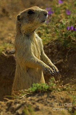 Photograph - Prairie Dog-signed-#8434 by J L Woody Wooden