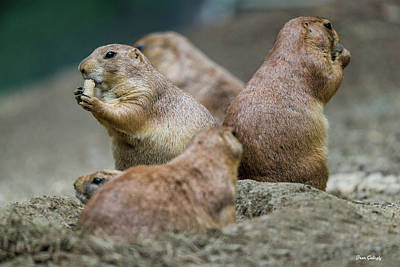 Photograph - Prairie Dog Town by Fran Gallogly