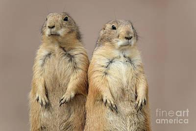 Photograph - Prairie Dogs by Elizabeth Winter