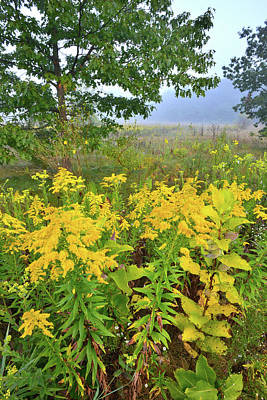 Photograph - Prairie Gold At Brookdale by Ray Mathis