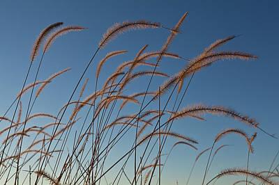 Prairie Grass Landscape Original by Steve Gadomski
