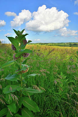 Photograph - Prairie Grasses And Milkweed In Glacial Park by Ray Mathis