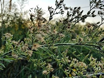 Photograph - Prairie Life 2 by Maria Urso