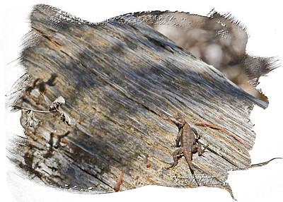 Photograph - Prairie Lizard _ 1b by Walter Herrit