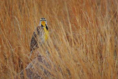 Photograph - Prairie Mystro  by Deborah Johnson