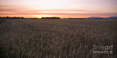 Photograph - Prairie Pink by Idaho Scenic Images Linda Lantzy