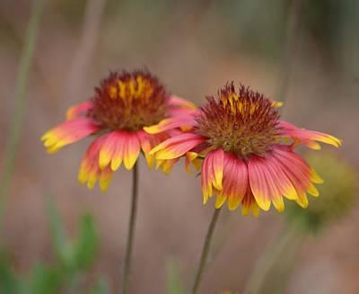 Photograph - Prairie Pink by Maria Urso