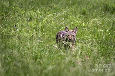 Photograph - Prairie Predator by Andrea Silies