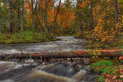 Photograph - Prairie River Tree Crossing by Dale Kauzlaric