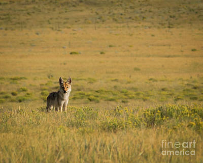 Photograph - Prairie Schooner by Jon Burch Photography