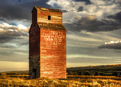 Photograph - Prairie Sentinel by Wayne Sherriff