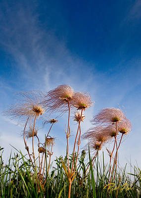 Photograph - Prairie Smoke by Rikk Flohr