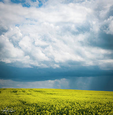 Photograph - Prairie Storm Over The Canola by Philip Rispin