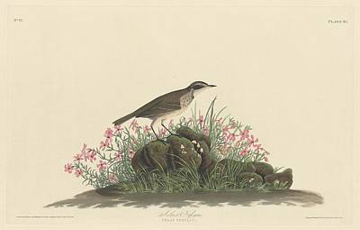 Prairie Titlark Art Print by Rob Dreyer