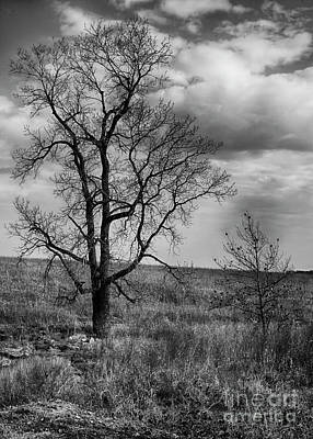 Photograph - Prairie Tree by David Cutts