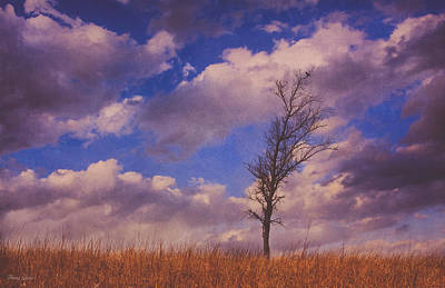 Photograph - Prairie Tree Survivor by Anna Louise