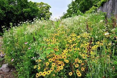 Photograph - Prairie View Wildflowers by Ray Mathis