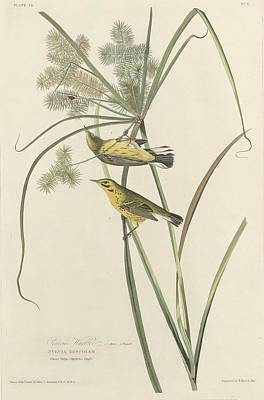 Warbler Drawing - Prairie Warbler by Dreyer Wildlife Print Collections