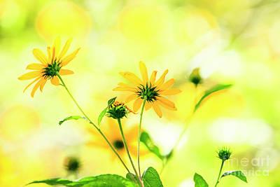 Photograph - Prairie Wildflowers by Ben Graham