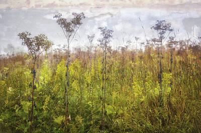 Prairie Wildflowers Of Retzer Nature Center  Art Print