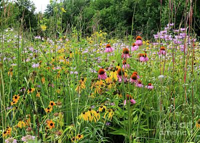 Photograph - Prairie Wildflowers by Paula Guttilla