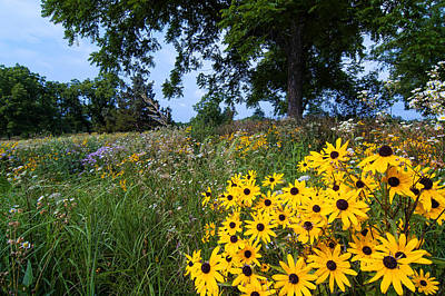 Photograph - Prairie Wildflowers by Steve Stuller