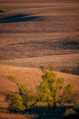 Photograph - Prairie Willows by Jeff Phillippi