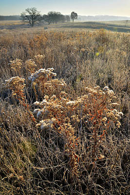 Photograph - Prairieview Fall Wildflowers by Ray Mathis