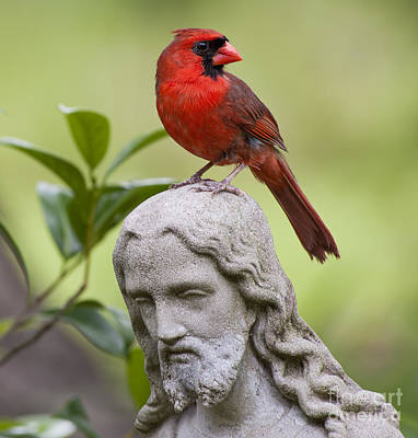 Garden Scene Photograph - Praise The Lord by Bonnie Barry