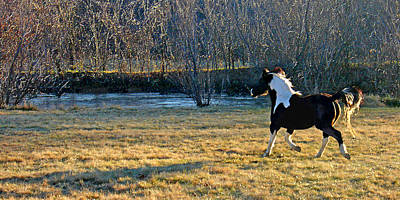 Photograph - Prance by Steve Karol