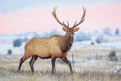 Photograph - Prancer by Jack Bell