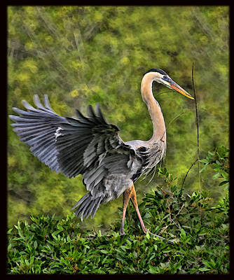 Photograph - Prancing Heron by Shari Jardina