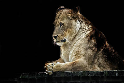 Animals Royalty-Free and Rights-Managed Images - Pray by Martin Newman