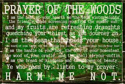 Wooden Photograph - Prayer Of The Woods 2.0 by Michelle Calkins