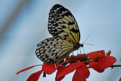 Praying Butterfly Art Print